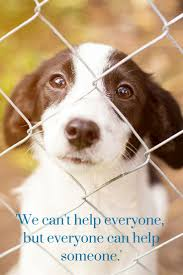 We Cant Help Everyone But Everyone Can Help Someone Lend A Paw