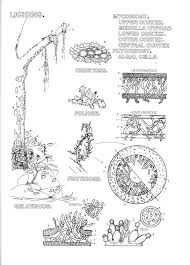 Botany Coloring Pages Listitdallas