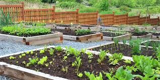 planting garden how to start a vegetable garden planting gardens in graves pdf free