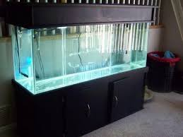 water testing in your freshwater aquarium
