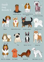 dog chart group of small dogs breeds hand drawn chart