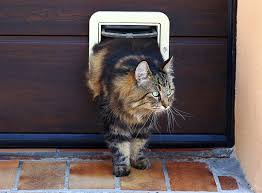 what does cat flap installation cost in