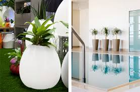 hire office short term indoor plant hire ambius new zealand