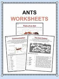 Ant Facts, Worksheets & Information For Kids