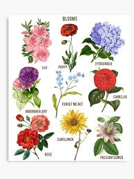 Botanical Chart Print Vintage Blooms Botanical Flower Floral Chart Canvas Print