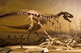 How Do Dinosaurs Get Their Names Wonderopolis
