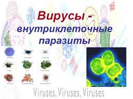 Биология реферат на тему вирусы Вскоре учёные убедились что кристаллизировать можно не только вирус табачной мозаики но и ряд других вирусов Когда вирусологи поближе познакомились с