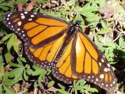 Image result for best Gastroenterologist butterflies yet