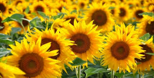 Jak Vybrat Květiny Podle Znamení Zvěrokruhu Styl Instorycz