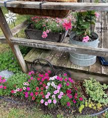 galvanized buckets annuals climbing