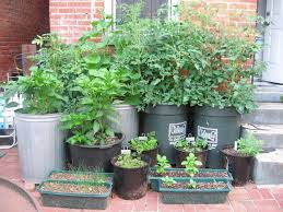 Small Picture Vegetable Container Garden For more Organic Gardening Ideas