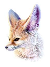 fennec fox drawing.  Fox Jbatesart Fennec Fox Acrylic On Paper 11x17in The Signed Original Is For Inside Fox Drawing W