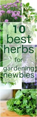 Kitchen Herb Garden Planter 1000 Ideas About Kitchen Herb Gardens On Pinterest Herb Garden