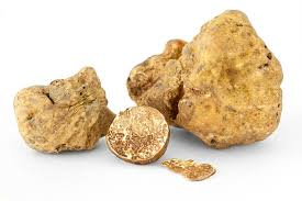 Image result for white truffle images