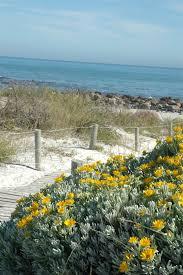 hardy coastal plants sa garden and home