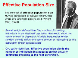 effective population size definition examples of deviation from hardy weinberg equilibrium ppt download