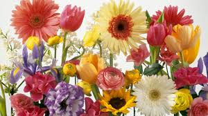 Image result for free images flowers