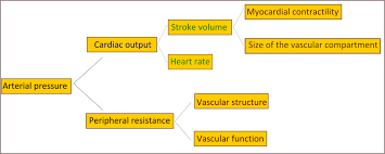 Htn Chart Pathophysiology Of Hypertension Wikipedia