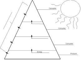 Blank Pyramid Diagram Ecological Pyramid Worksheet