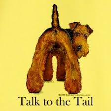 Image result for Welsh terrier tails