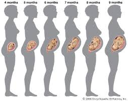 8 Pregnancy Tummy Growth Chart Belly Silhouette Month By