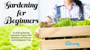 gardening tips for beginners sun