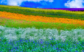 spring nature background hd. Brilliant Nature HD Wallpaper  Background Image ID592837 Intended Spring Nature Hd