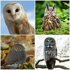 18 Owl Species With Irresistible Faces Mnn Mother Nature