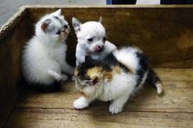 dogs and cats having babies. Exellent Cats To Dogs And Cats Having Babies