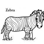 Small Picture Cute Ba Zebra Coloring Page Free Printable Coloring Pages Coloring