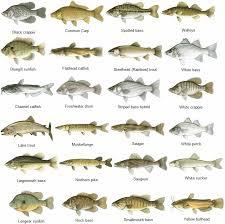 Mississippi Fish Identification Chart Take A Kid
