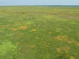 grass field aerial. Interesting Aerial Image Result For Aerial Grass Field To Grass Field Aerial