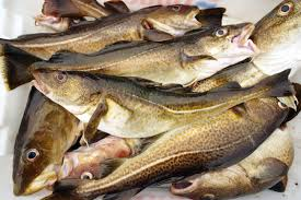 The 25 Best Tasting Fish In The World A Very Unscientific