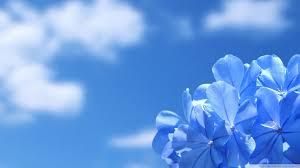 desktop wallpaper flowers high resolution. Contemporary High Standard  With Desktop Wallpaper Flowers High Resolution E