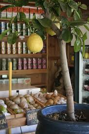 How To Grow A Lemon Tree From Seed Growing Wild
