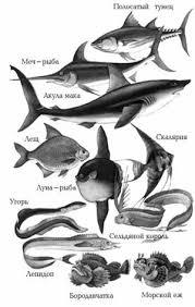 Дипломная работа Изучение темы Морфологические адаптации рыб в  Дипломная работа Изучение темы Морфологические адаптации рыб в школьном курсе биологии ru