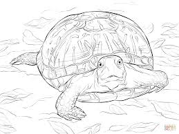Realistic Ornate Box Turtle Coloring Pages