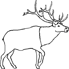 Small Picture Caribou coloring page Animals Town animals color sheet