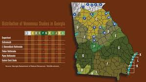 Georgia Snake Identification Chart Your Guide To The Six Venomous Snakes In Georgia 11alive Com