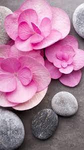 Pink flowers, stones, SPA theme ...