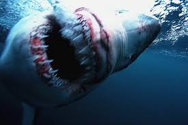 shark world that s a wish that would come back to bite us  shark s open mouth