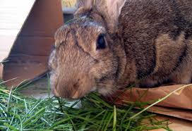 choosing the best hay for your rabbit