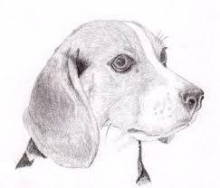 Disegni Da Copiare Settemuse It Con Disegni Di Cani A Matita E