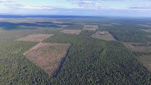 Лесной форум Гринпис России • Просмотр темы Что не так с fsc  с прямоугольными границами не учитывающими структуру лесных ландшафтов На фотографиях сертифицированные рубки в МЛТ в Двинско Пинежском междуречье
