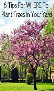 The 10 best trees for small yards | Grass FREE Lawn | Pinterest | Yards,  Gardens and Landscaping