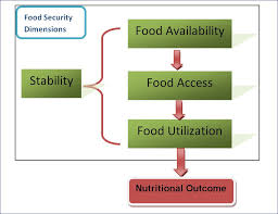 basic concepts of food security definition dimensions and  dimensions of food security