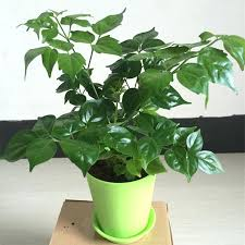 office plants for sale. Beautiful Plants Indoor  To Office Plants For Sale H