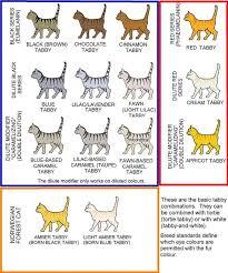Tabby Colours Chart Domestic Cat Orange Tabby Cats