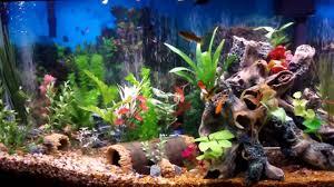 Fish Tank Best Fish Tank Aquarium I Ever Created Beautiful Youtube