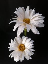 Daisy Paper Flower Diy Crepe Paper Daisy Flower Paper Daisy Paper Flowers